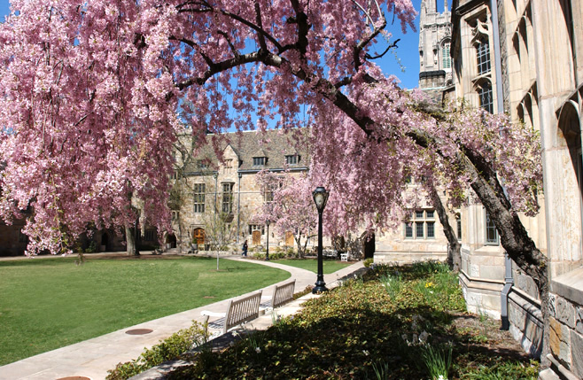 images of the yale campus