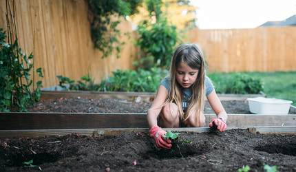A little girl planting vegetables in a garden,