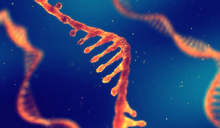 A single strand of DNA