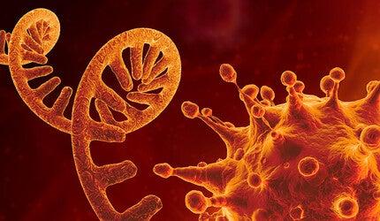 DNA strand and coronavirus