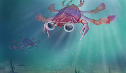 Artistic reconstruction of Callichimaera perplexa: The strangest crab that has ever lived