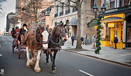 Photo of a horse-drawn carriage