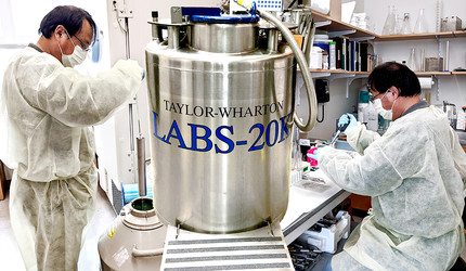 Xiaojun Xing does cryopreservation work on a Yale research strain.