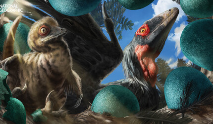 A newly hatched Deinonychus chick is surrounded by colorful blue eggs in an above ground nest.