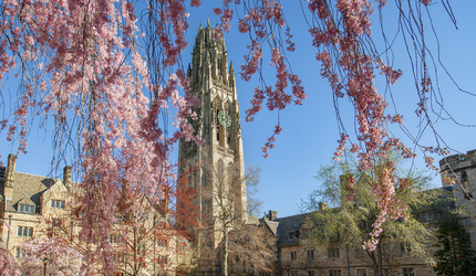 Harkness Tower framed by cherry blossoms
