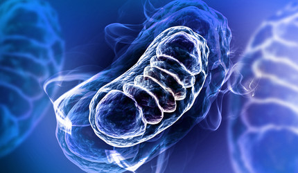 3d rendered Digital illustration of Mitochondria in color background