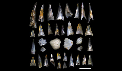 Selected 50-million-year-old microfossil fish teeth and shark scales (center) from the study site.