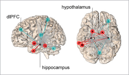 A diagram of the brain with the the hippocampus and hypothalamus pinpointed