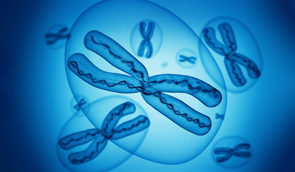 X chromosomes