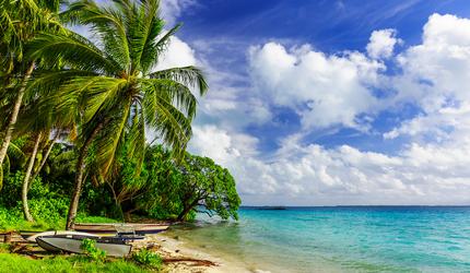 A windswept palm tree on the coast of Fanning Island