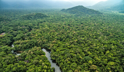 Aerial view of a rainforest.