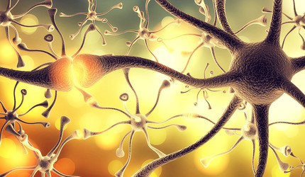 A graphic representation of nerve cells.