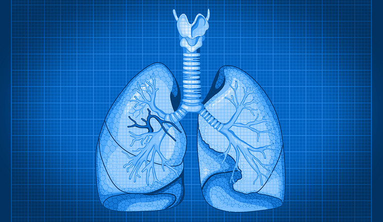 A blueprint-style illustration of human lungs