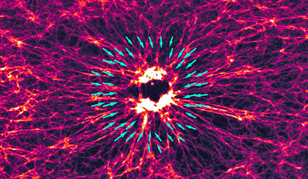 Image of the F-actin network where light has been used to activate myosin in the middle.