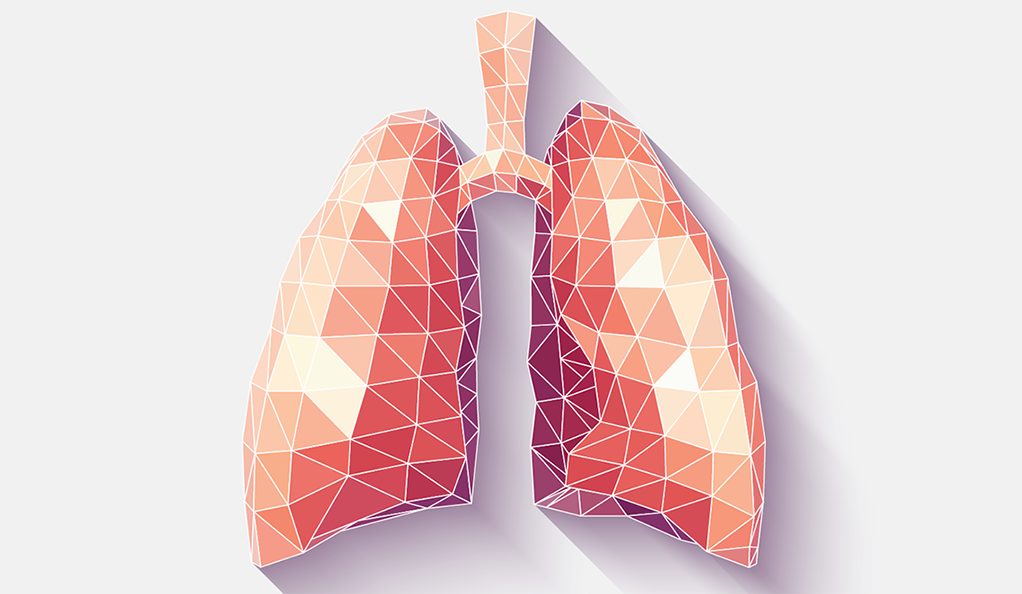 faceted lungs illustration