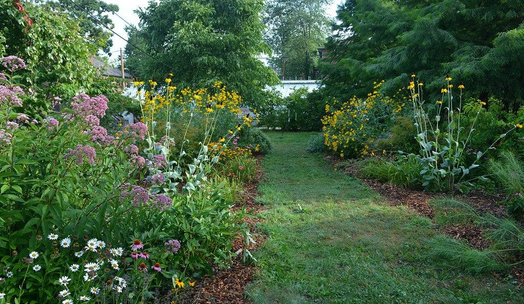 An outdoor flower garden