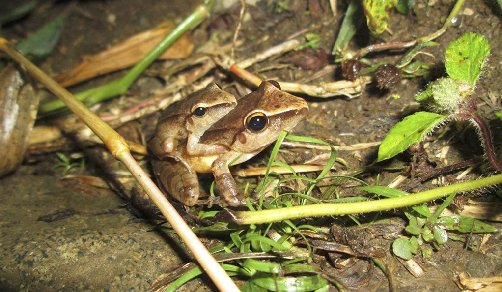 A mother and baby frog