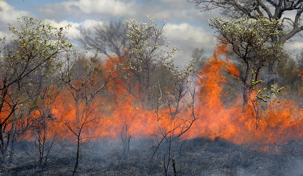 A forest wildfire.