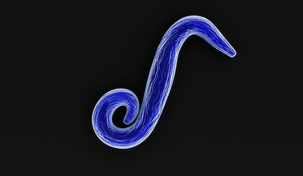 The malaria parasite Plasmodium falciparum.