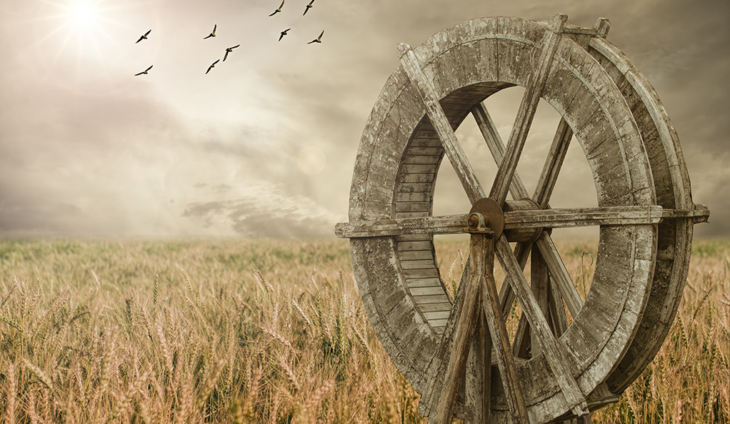A wheat field and an old wooden grain mill wheel.
