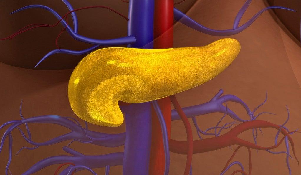 Image of human pancreas