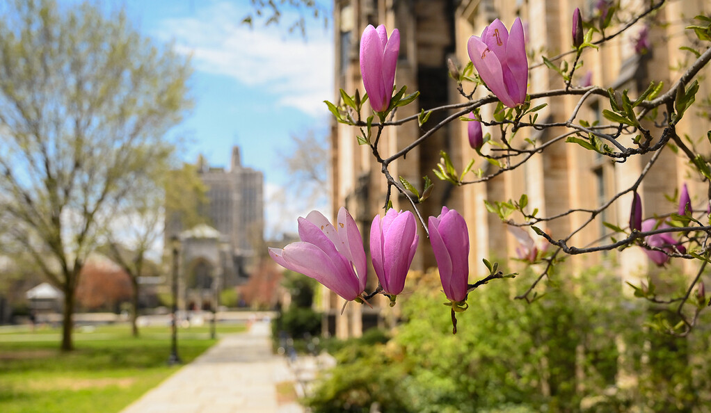Spring flowers on Cross Campus.