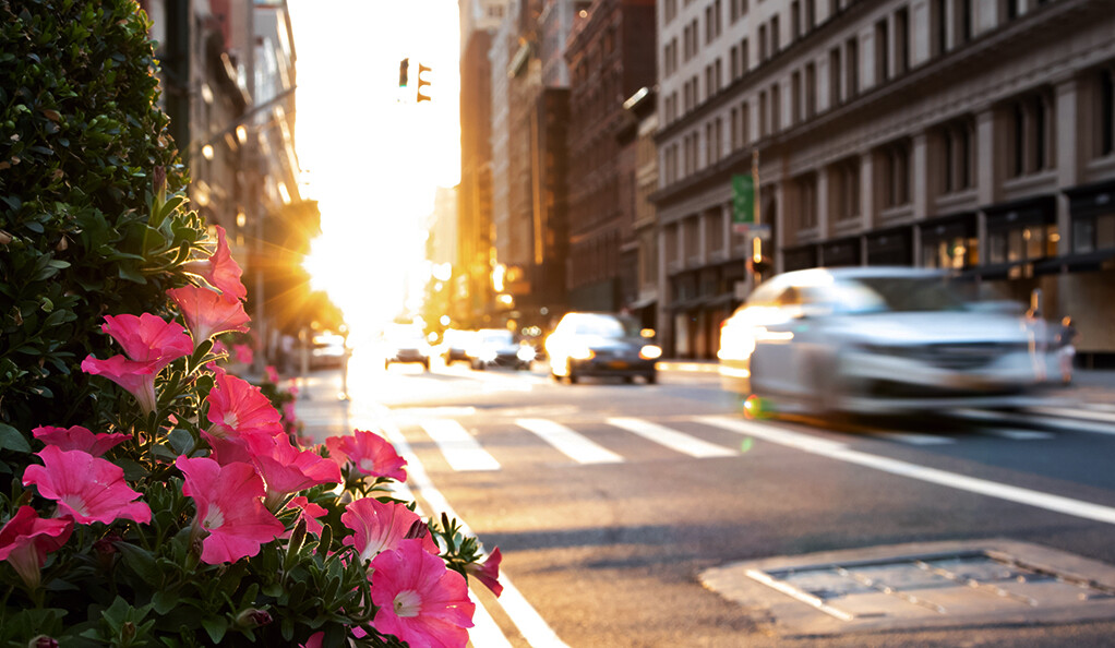 Sun beaming down on urban asphalt street.