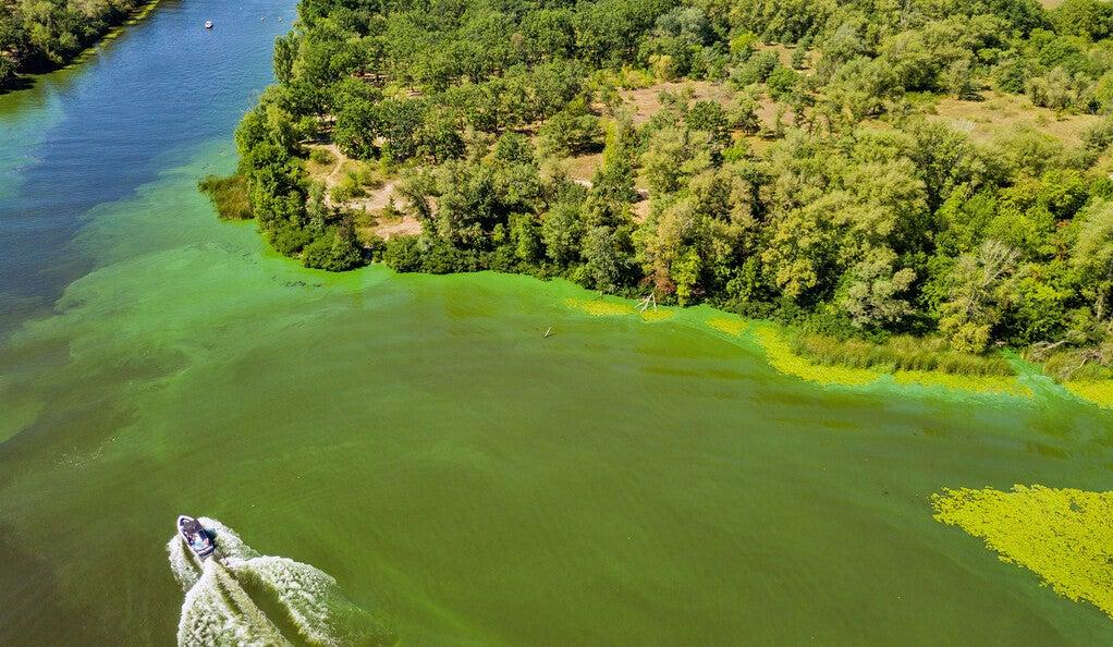 Motorboat and algae bloom.