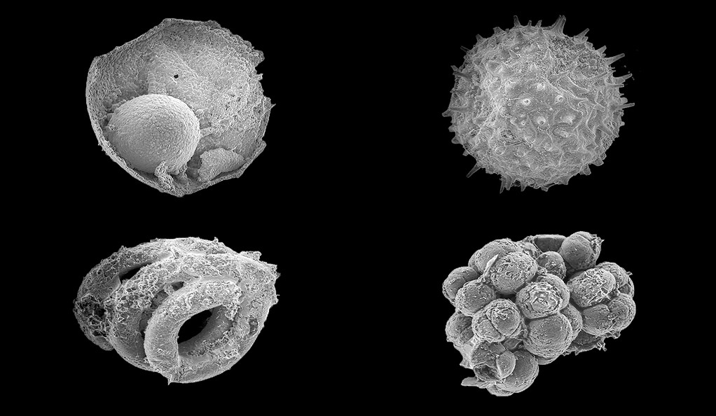 Assorted microfossils from the Ediacaran Khesen Formation, Mongolia.