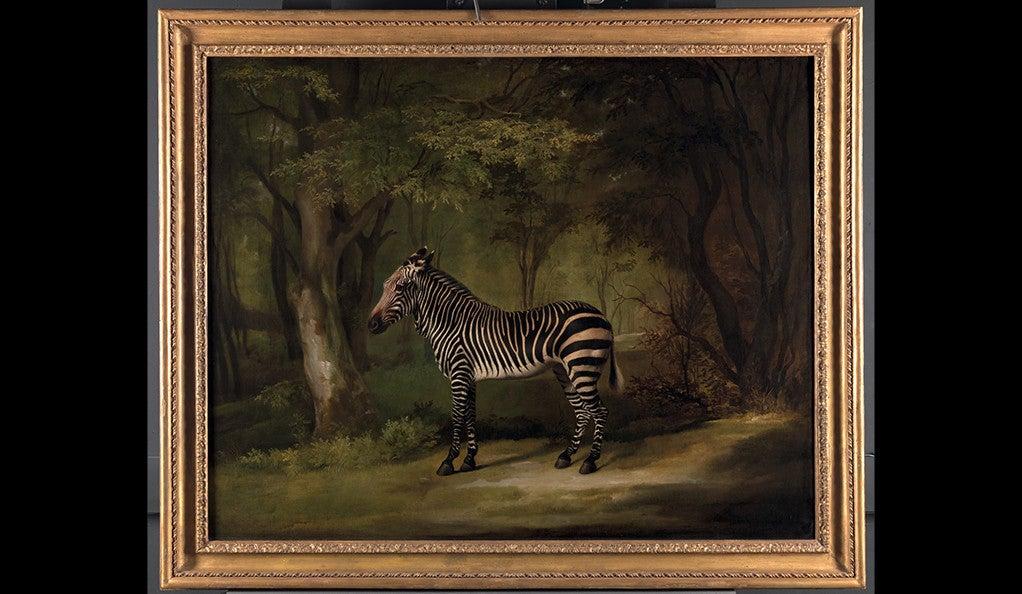 George Stubbs, 1724–1806, British, Zebra, exhibited 1763, Oil on canvas, Yale Center for British Art