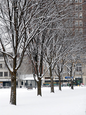 The New Haven Green covered in snow, looking towards Chapel Street
