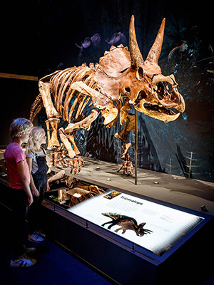 A Triceratops skeleton on display in the Netherlands