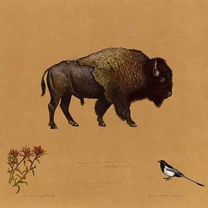 Painting of a bison, a wildflower, and a bird