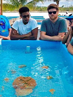 A coral tank at Coral Vita before Dorian