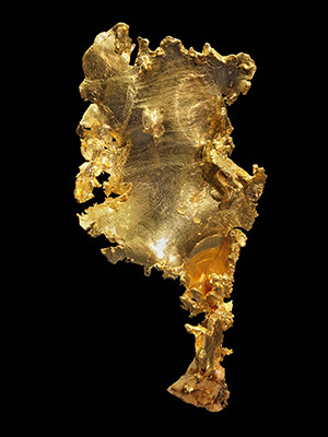 California gold on display at the Peabody Museum of Natural History