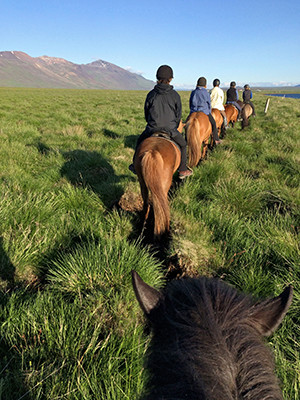 Point of view image of an Icelandic horse ride