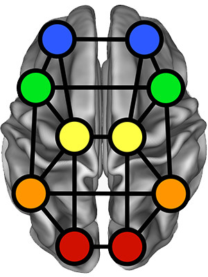 A map of the brain with different regions highlighted.