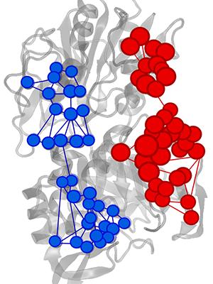 Effector triggered increase (red) or decrease (blue) of information flow in IGPS enzyme.