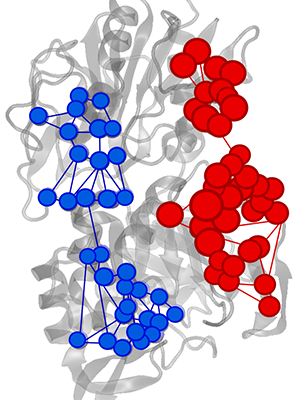 Effector triggered increase (red) or decrease (blue) of information flow in IGPS enzyme.