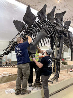 Removing the tail from the stegosaurus