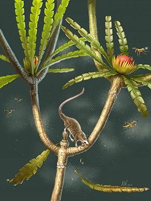 An artists conception of Microdocodon gracilis, a shrew-like animal