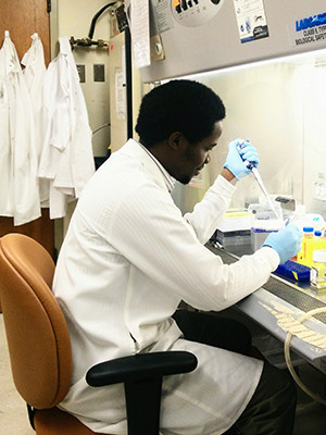 Ssenyange activating primary CD4+ cells (WBCs) before transfection in a biological safety cabinet.