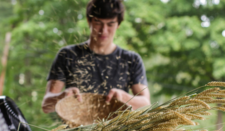 A student tosses the contents of a bowl to separate wheat from chaff.