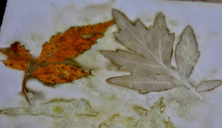 Fallen autumn leaves applied to paper through the eco printing process.