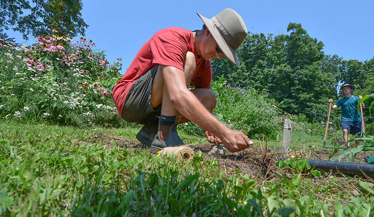 Adam Houston tending to farm plants in mid-August.