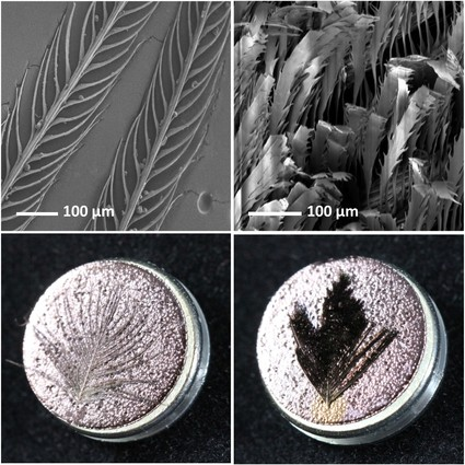 Microscopic images of bird of paradise plumage