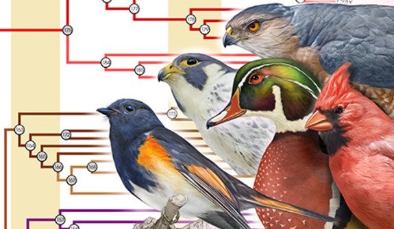 Atlas del cambio climático para especies de árboles y aves | Paquete de herramientas sobre la resistencia al cambio climático de los Estados Unidos