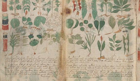 Mysterious Voynich Manuscript Reborn In Facsimile Edition  Yalenews-6892