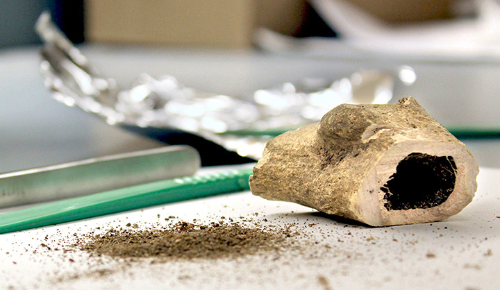 An ancient human bone specimen being tested for malaria at Yale University.