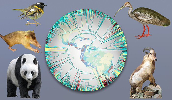 A collage depicting wildlife biodiversity on Earth